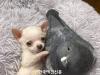 강아지와 비둘기의 특별한 우정