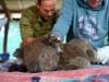 아프리카 이례적인 메뚜기떼 확산, 이상기후로 인한 재앙