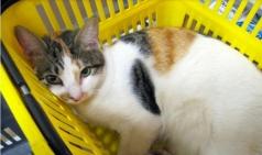 뉴질랜드 10대 슈퍼마켓 상품 중 '고양이 푸드' 포함