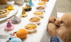 펫스팟, '수제 가정식'을 내세운 펫푸드 플랫폼 선보여