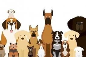 프랑스 파리, 10만 마리의 개를 위한 공원 조성 요청