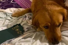여권 물어 뜯어 우한 여행 막은 반려견