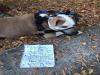 코로나19로 편지와 함께 버려진 강아지