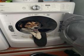 잘못 온 메시지에 담긴 행복한 강아지사진