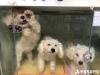 동물보호법 미준수 동물판매업체 태반, '2020 동물판매업 동물보호법 이행 실태 조사' 결과 발표