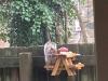 집으로 찾아오는 다람쥐 위에 테이블 만든 남성