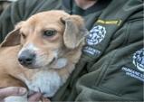HSI와 한국동물실험 대체법학회, '세계 실험동물의 날' 맞아 국내 연구진 치하