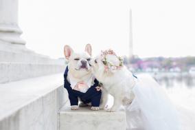 사랑을 맹세한 댕댕이 커플의 결혼식 화보