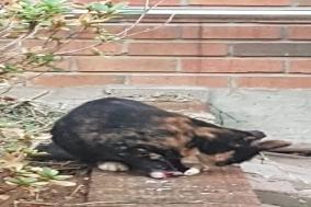 """카라 """"연이은 길고양이 연쇄 살해 및 협박.. 경찰의 철저한 수사 요구"""