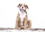 반려동물 등록과 말소 신고 고지 의무 담은 반려동물 복지법안 개정 예고