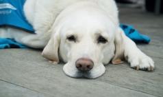 유기·유실된 반려동물 13만여 마리... 전년대비 12% 증가