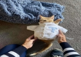 고양이 손주를 위해 스웨터를 뜨는 할머니