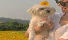 가수 아이비 꽃밭에서 반려견과 함께 싱그러운 일상 공개