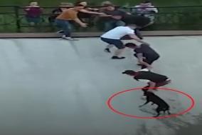급류에서 아찔한 순간! 고립된 강아지 구조하는 감동 사연