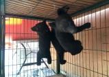 동물자유연대, 사육곰의 열악한 환경을 고발하며 불법 사육된 곰을 위한 보호소 개설 주장