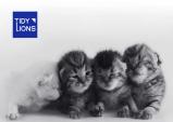 온힐, 반려묘를 위한 프리미엄 두부모래 'TIDY LIONS' 출시