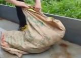 비글구조네트워크, 마취제 없이 안락사 시킨 동물보호소 고발