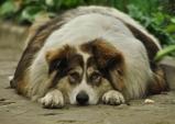 반려동물 수명 2.5년 단축시키는 질병 '비만', 예방법은?