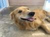 유기동물보호센터 '리얼쉘터' 파양된 반려동물에게 새로운 가족 찾아