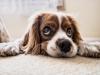 지투지바이오, 비수술적 반려동물 중성화제 상용화 속도 '잰걸음'