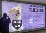 2호선 홍대입구역에 도살장 구출견 '설악이' 광고판 한 달간 등장