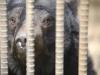 2021년 2억 5천만원 예산 확보, 국내 첫 사육곰 보호시설 물꼬 텄다