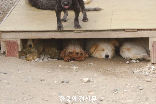web_내사바 소개.JPG