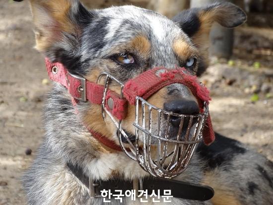 dog-1897631_960_720수정.jpg