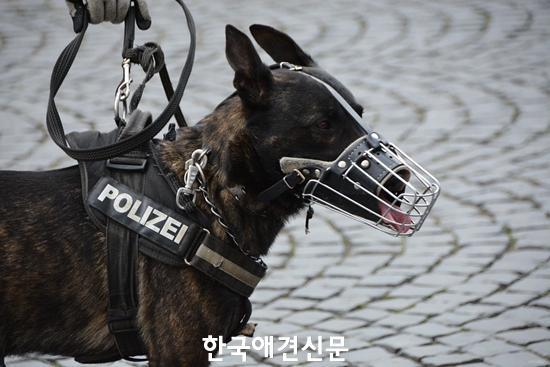 police-1321255_960_720.jpg