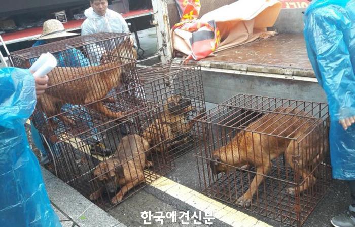 '생존권 보장 촉구' 집회 개최한 한국육견단체협의회, 동물권 활동가들과 맞불시위