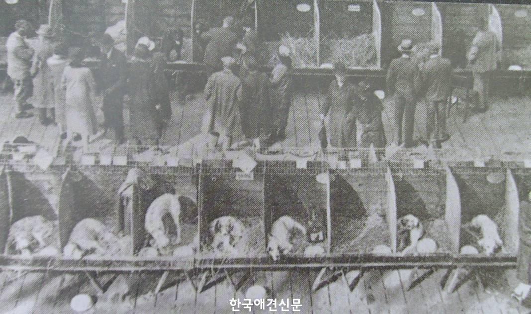 그림 5 1891년 크러프트 도그쇼.jpg
