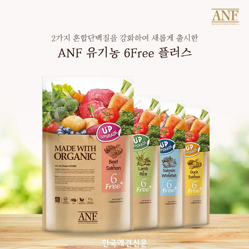 ANF6free+이미지.jpg