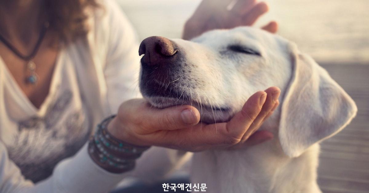 dog-ignoring-human.jpg