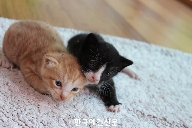 kitten-2328222_640.jpg