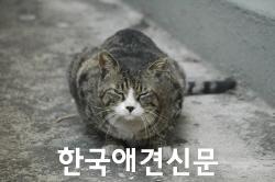 cat-766639_1920.jpg
