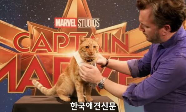 캡틴마블고양이구스1.jpg