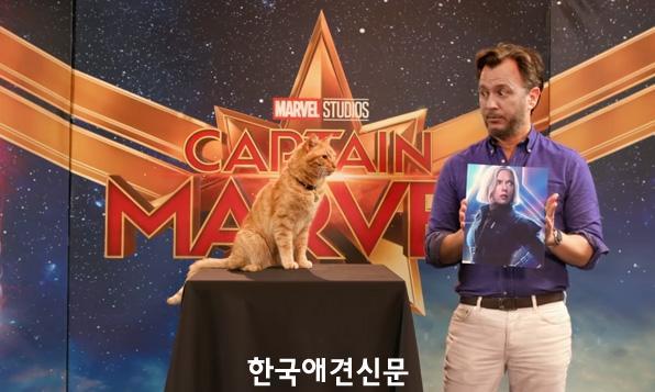 캡틴마블고양이구스2.jpg