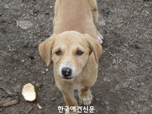 크기변환_유기견.jpg