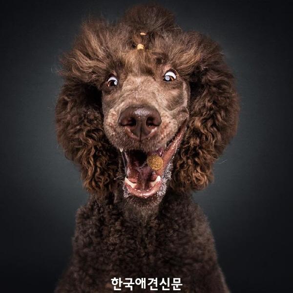 크기변환_웃긴개사진 (3).jpg