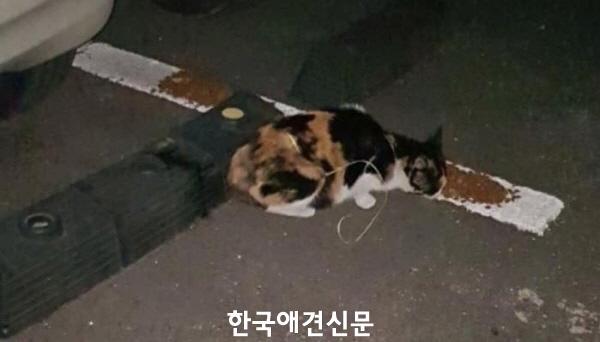크기변환_부산끈길고양이 (1).JPG