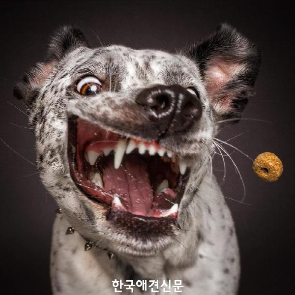 크기변환_웃긴개사진 (2).jpg
