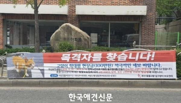크기변환_부산끈길고양이 (3).JPG