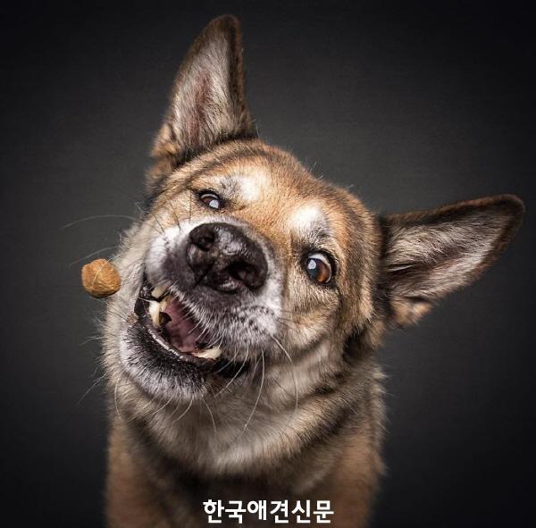 크기변환_웃긴개사진 (1).jpg