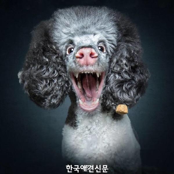 크기변환_웃긴개사진 (5).jpg