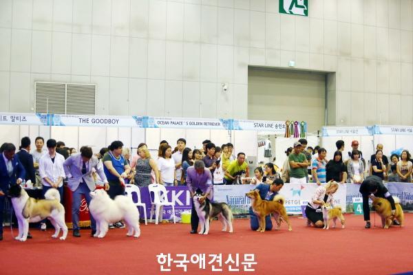 크기변환_(도그쇼)kkf펫페스티벌.JPG