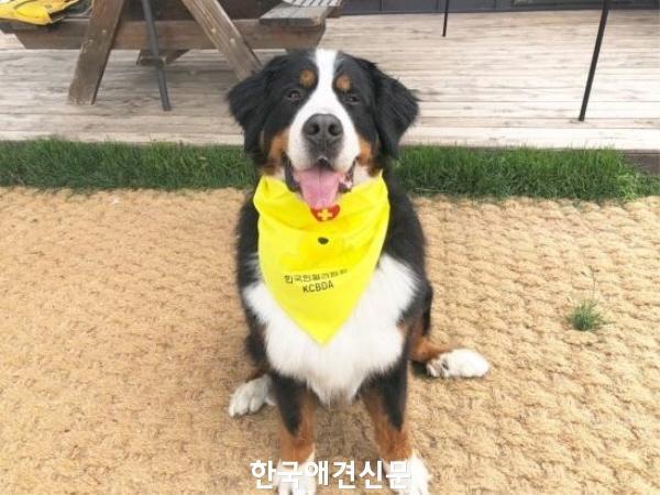 크기변환_명예의전당49호헌혈견삼수.JPG