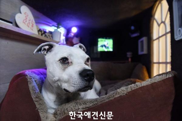 크기변환_럭셔리개 (1).jpg