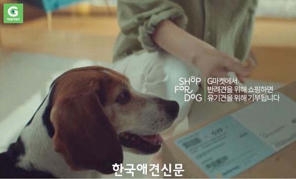크기변환_g마켓반려견캠페인1.JPG