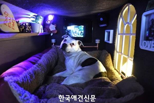 크기변환_럭셔리개 (4).jpg