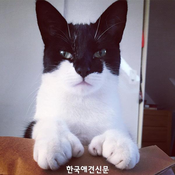 [크기변환]chat batman.jpg